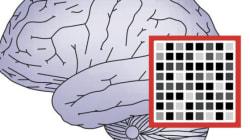 恐怖記憶を消去するニューロフィードバック技術を開発