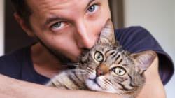 놀랍게도, 고양이는 음식보다 당신을 더