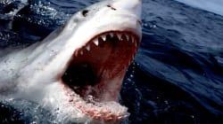 Βίντεο: Μεγάλος λευκός καρχαρίας «υποδέχεται» τους τουρίστες με ένα κοφτερό