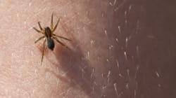 Έρευνα: Οι αράχνες μπορούν να φάνε όλους τους ανθρώπους (και θα μείνουν