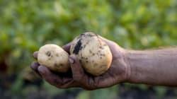 Ο Ματ Ντέιμον δικαιώνεται: Περουβιανοί επιστήμονες καλλιέργησαν «αρειανές»