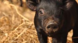 동물은 생명이다   가축전염병 창궐을