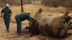 남아공 '코뿔소 뿔 농장'이 다시 문을