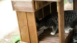 성남시가 9개 공원에 고양이 급식소를