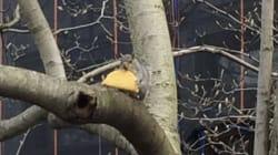 다람쥐가 자기 몸만 한 타코를