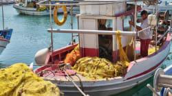 Η Μεσόγειος έχασε το 41% των θαλάσσιων θηλαστικών και των 34% των ψαριών της μέσα στα τελευταία 50