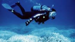 오스트레일리아가 산호초를 살릴 놀라운 계획을