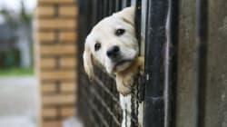 Αυτόφωρη διαδικασία σε όσους βασανίζουν ζώα κατόπιν παραγγελίας της Εισαγγελίας του Αρείου