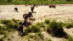 Ένα «Lion King» στον πραγματικό κόσμο: Απίστευτες εικόνες άγριων ζώων στην αφρικανική
