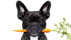 Darf man Barf? Über Veganismus bei