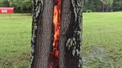 사우론의 눈(반지의 제왕)이 나무에 숨어