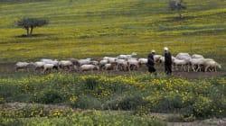 Colloque sur la sécurité alimentaire en Algérie en mai à