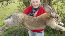 거대한 토끼가 유나이티드 비행기에서