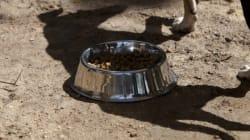 73χρονος καταδικάστηκε σε 2,5 χρόνια φυλάκιση με αναστολή για κακοποίηση σκύλου στον