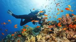 La traçabilité du corail définie par un arrêté
