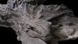 소화기관과 갑옷 같은 피부가 온전한 '공룡 미라'가
