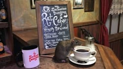이 카페에서는 고양이 대신 '쥐'와 어울릴 수