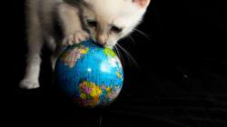 Ούτε επίπεδη, ούτε σφαιρική. Η Γη έχει το σχήμα μια παιχνιδιάρας γάτας και ιδού η