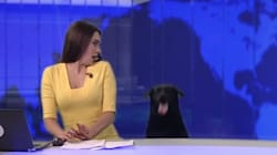 생방송 중인 뉴스 스튜디오에 개가 깜짝 출연한