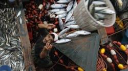 Produits halieutiques: Les pays du Golfe, un nid d'opportunités pour le