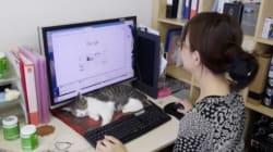 고양이를 입양하면 보너스를 주는 일본
