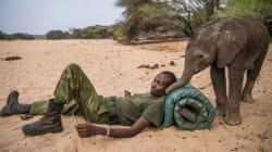 새끼 코끼리 보호의 정석을 보여준 한 케냐 부족