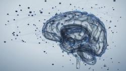 Επανάσταση στη νευροεπιστήμη: Νέα έρευνα μας φέρνει πιο κοντά στην αποκάλυψη των ανθρωπίνων