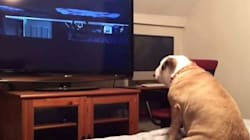 Υπερπροστατευτικός σκύλος «σώζει» τους μικρούς πρωταγωνιστές μίας ταινίας