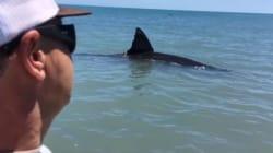 Εσείς θα πλησιάζατε έναν λευκό καρχαρία αν είχε βγει στα ρηχά; Αυτοί οι δύο τύποι τον βιντεοσκόπησαν
