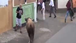 Βιντεοσκοπούσε με το i pad και για κακή του τύχη δεν είδε τον ταύρο να