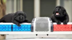 Αυτά τα νέα σκυλιά που μπήκαν στην ομάδα της αστυνομίας θα σας κάνουν να φωνάξετε