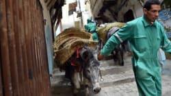 A Alger, l'âne,