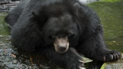 Αλάσκα: Δύο θανατηφόρες επιθέσεις από αρκούδες σε δύο