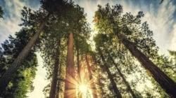 Του «σκότωσαν» το δέντρο που μεγάλωνε 30χρόνια. Και ο πικραμένος γεωπόνος πήρε την τέλεια