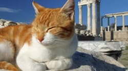 Πώς οι γάτες κατέκτησαν τον πλανήτη
