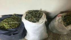 Ο ελληνοαλβανικός «πόλεμος του τσαγιού»: Αλβανοί περνούν τα σύνορα και κλέβουν βότανα στη