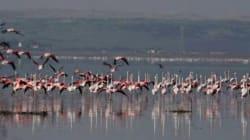 Lac Télamine (Oran): le paradis des flamants roses