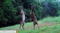 숲 속에서 벌어진 엄청난 격투의