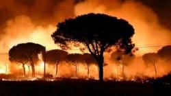 Plus de 2.000 personnes évacuées à cause d'un incendie dans le sud de