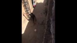 En vacances à Beni Snous (Tlemcen), Riyad Mahrez donne une leçon de modestie