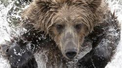 Αλάσκα: Εντεκάχρονο αγόρι έσωσε τρία άτομα από επίθεση αρκούδας πυροβολώντας