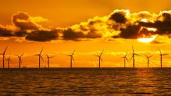 연안 풍력 발전소가 고래를 죽인다는 비난은