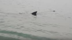 Un requin dans le nord du