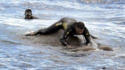 스리랑카 해군이 파도에 쓸려간 코끼리를