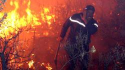 Feux de forêts: les indemnisations toucheront les sinistrés dans 17