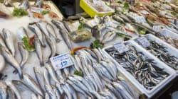 Η Ελλάδα εισάγει το 66% των ψαριών που