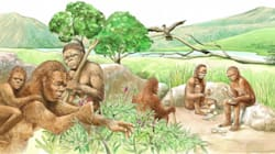 Ερευνητές ανακάλυψαν ένα «είδος φάντασμα» με το οποίο συνευρίσκονταν οι αρχαίοι μας
