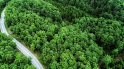 WWF Ελλάς: Να ανακληθεί η υπουργική απόφαση για τις οικιστικές πυκνώσεις ζητά ο διευθυντής