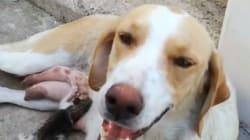 Σκυλίτσα φροντίζει αδέσποτο γατάκι στην