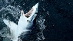 Βίντεο: Καρχαρίας πήδηξε πάνω σε αλιευτικό και...σκάλωσε